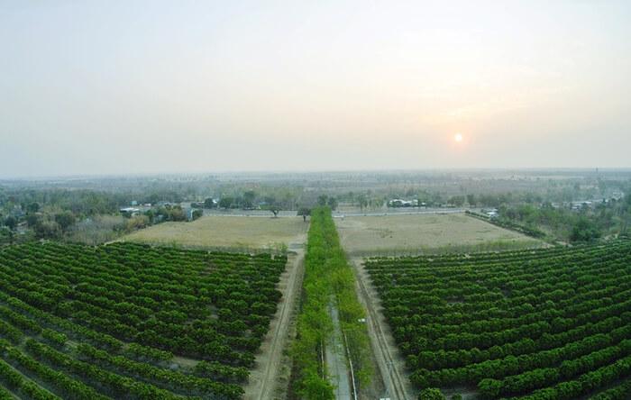 Green, Atmospheric phenomenon, Sky, Field, Morning, Plantation