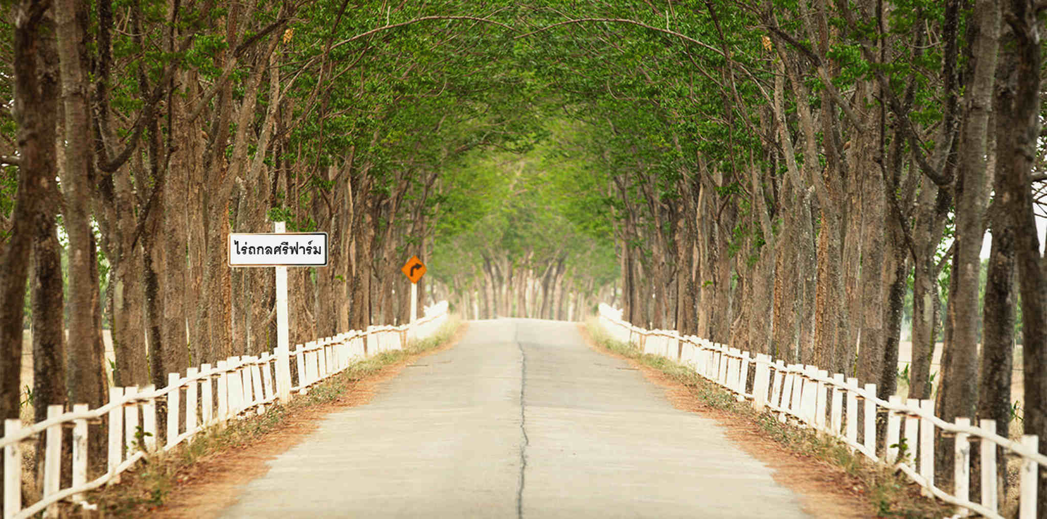 Tree, Thoroughfare, Lane, Road, Natural landscape, Road surface, Path, Infrastructure, Trail, Woody plant, Walkway, Nonbuilding structure, Plant, ถกลศรีฟาร์ม, ถกลศรีฟาร์ม เพชรบูรณ์
