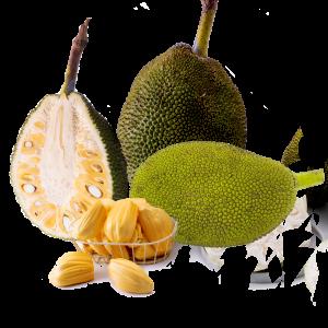 Jackfruit, Artocarpus, Plant, Leaf, Tree, Fruit