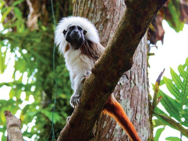 Vertebrate, Wildlife, Terrestrial animal, Primate, Organism, Tree, Branch, Plant, Marmoset, Singapore Zoo, New World monkeys