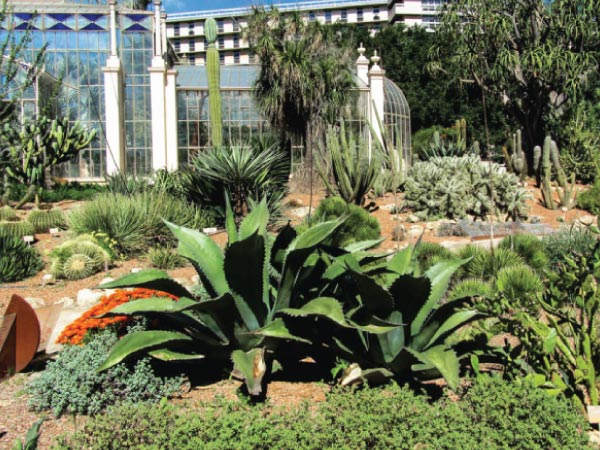Plant, Botanical garden, Flower, Garden, Botany, Plant community, Terrestrial plant, Landscape, Agave, Herb, Botanical garden