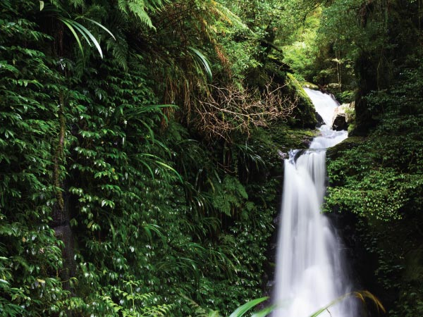 Water resources, Waterfall, Body of water, Natural landscape, Vegetation, Nature, Nature reserve, Water, Watercourse, Rainforest, Jungle, Old-growth forest, Natural environment, Valdivian temperate rain forest, Forest, Stream, Biome, Chute, Tropical and subtropical coniferous forests, Tree, Waterfall, Gwongurai Falls