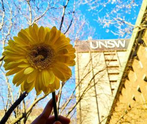 Sunflower, Yellow, Flower, Sky, Blue, Plant, Daytime, sunflower, Spring, Petal, Summer, Sunlight, Branch, Tree, Wildflower, Daisy family, Flowering plant, Pollen, University of New South Wales, Common sunflower