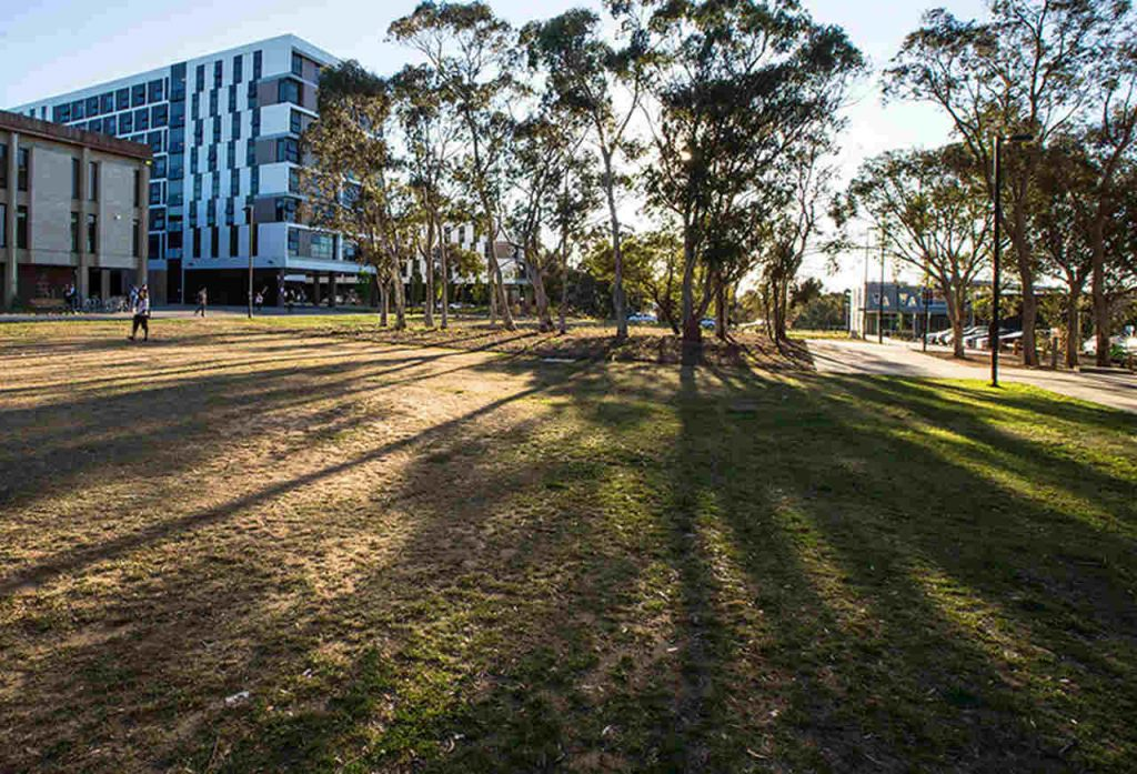 Tree, Grass, Daytime, Architecture, Property, Public space, Residential area, Lawn, Sky, House, Real estate, Shadow, Woody plant, Neighbourhood, Building, Sunlight, Plant, Road, City, Home, University of Canberra, University