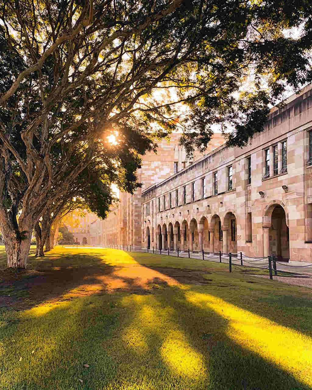 Tree, Architecture, Sky, Light, Yellow, Building, Arch, Sunlight, Grass, Spring, Plant, City, College, Street, The University of Queensland, Bond University, The University of Western Australia, University