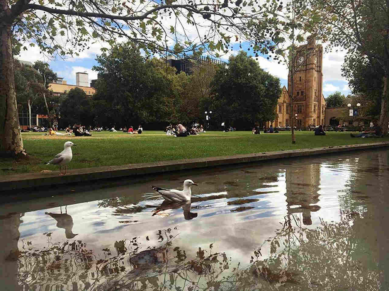 Pond, Tree, Water, Reflecting pool, Reflection, Grass, Waterway, Public space, Bank, Park, Botany, Duck, Bird, Water bird, Spring, River, City, Plant, Lake, University of Melbourne